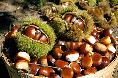 chestnuts properties and benefits